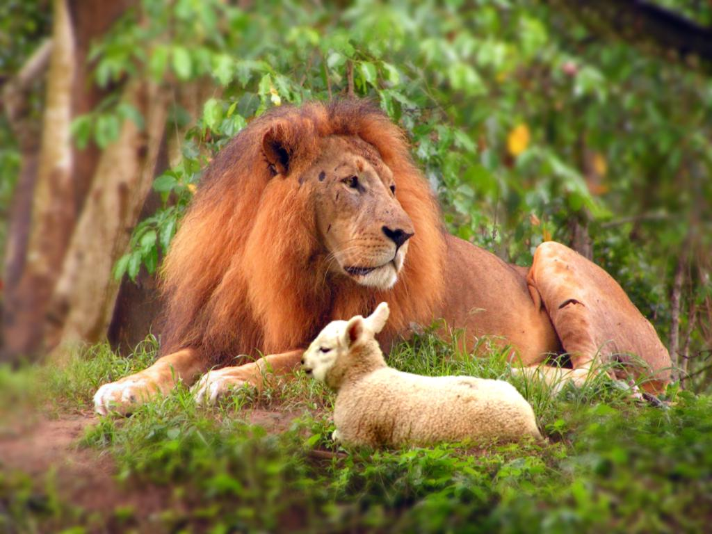 Lion and Lamb shall lay together.